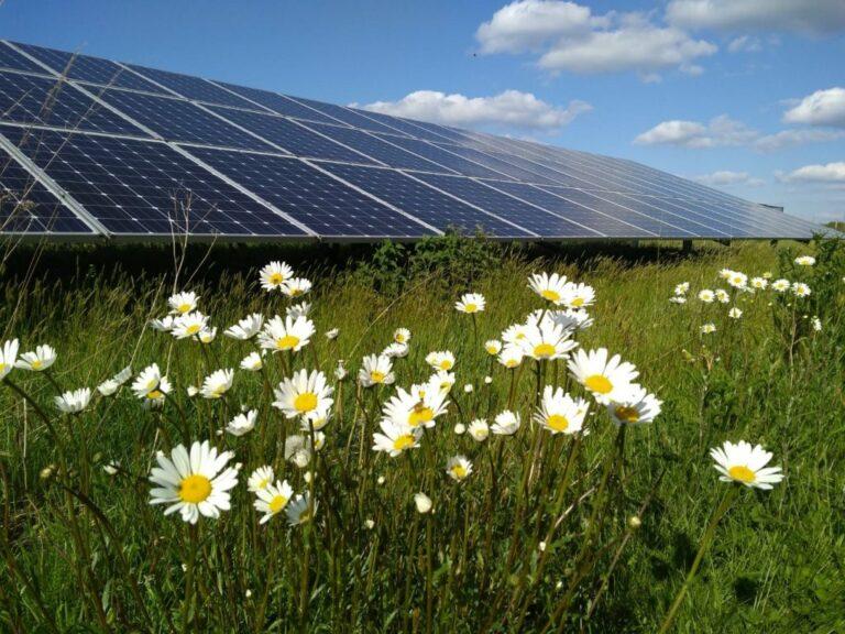 Solarpark De Kwekerij scoort hoog op biodiversiteit